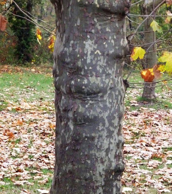 Troncs d'arbre